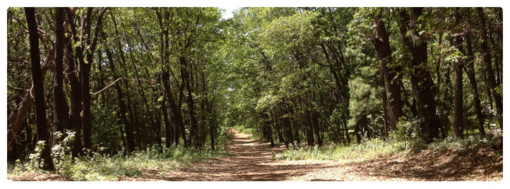 Photo of a dirt road through the woods in Magalia District